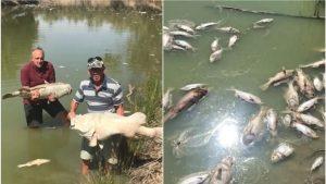 australia darling river fish death